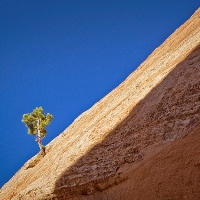 Small tree growing on side of a pyramid